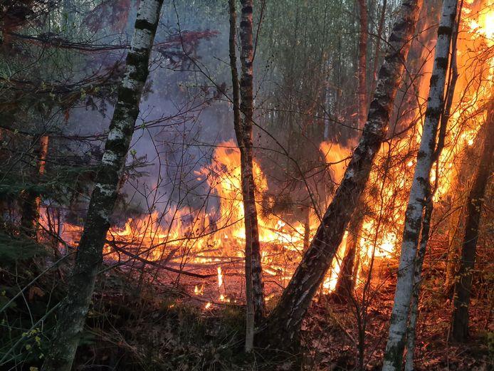 Beginnende bosbrand in Drunen, brandweer probeert vuur te blussen.