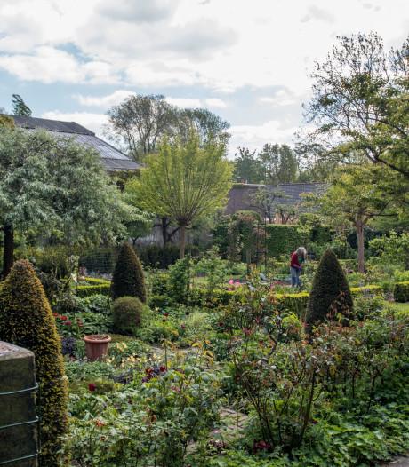 Tuinen in kwetsbare wijk Amsterdam mogen maar voor helft uit tegels bestaan