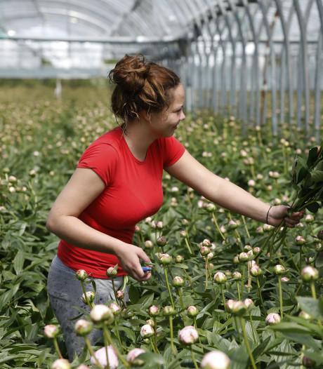Cuijk komt met drie woonlocaties voor arbeidsmigranten