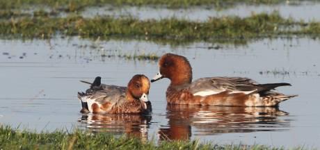 Natuurorganisaties drijven provincie Zuid-Holland in het nauw: rechters kritischer op afschieten dieren