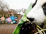 Ouwehands opent deuren voor bezoekers met negatieve test: 'Niet ideaal dagje dierentuin'