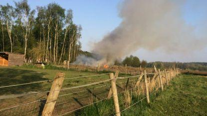 Jongeren bekogelen paard met bommetjes en zetten wei in brand