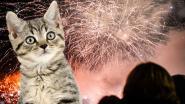 """Brugge schrapt vuurwerk op oudejaarsavond: """"Spektakel met drones is diervriendelijker"""""""