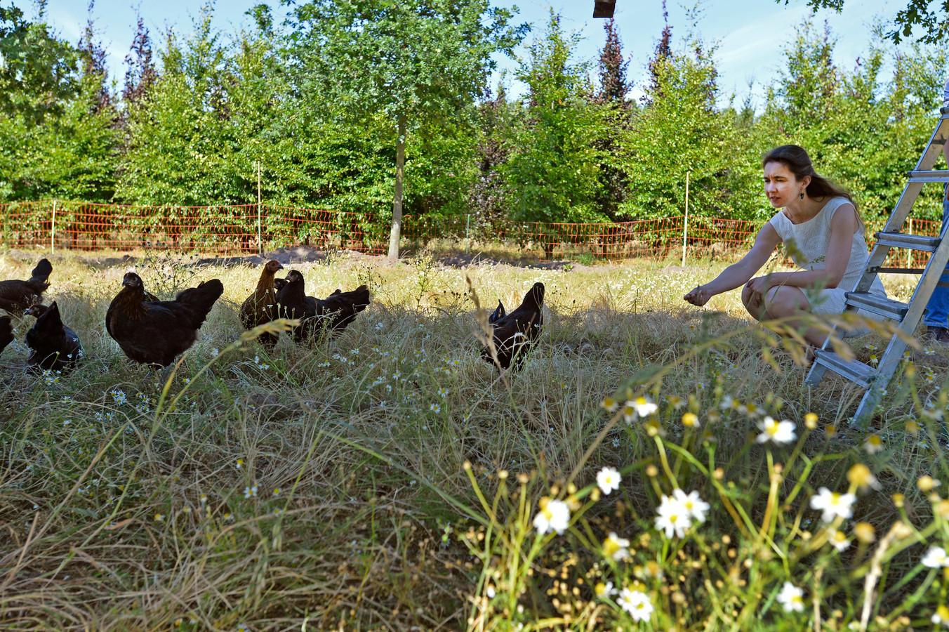 Gedeputeerde Anne-Marie Spierings kwam in 2017 naar Boomkwekerij Udenhout om kippen als onkruidbestrijders aan het werk te zien.