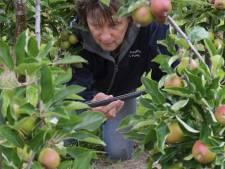 Bedruppeling voorkomt watertekort fruittelers, wel forse hagelschade