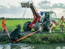 Brandweer en boer redden onwelwillende koe uit sloot