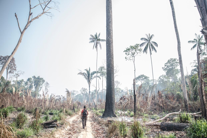 Een stuk ontbost Amazonegebied in de Braziliaanse deelstaat Rondonia. Beeld Marlena Waldthausen