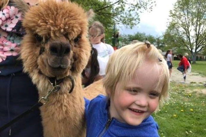 Sommige kinderen waren niet weg te slaan van bij de alpaca's.