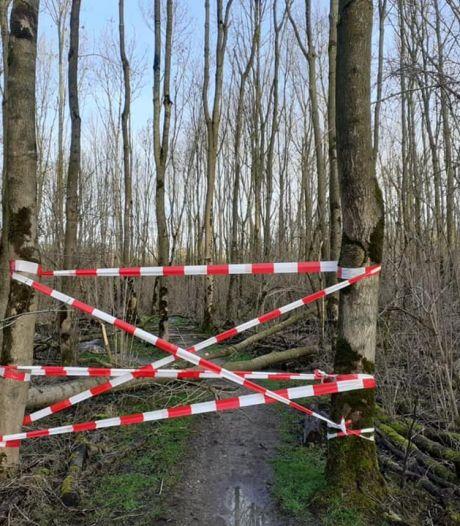 Zieke essen weg uit Broekpolder: 'Veiligheid voor alles'