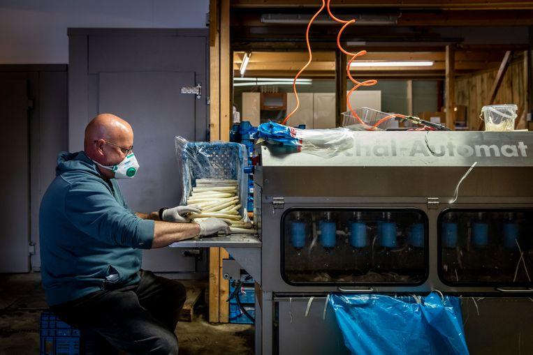 De familie Heger beschikt over een moderne machine die de asperges razendsnel van hun schil ontdoet. Beeld Dingena Mol