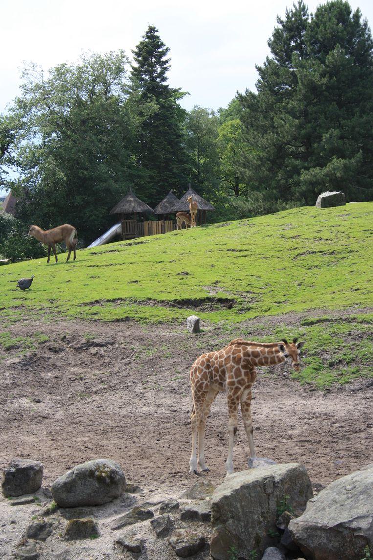 Dieren op de Afrikaanse savanne in het park. © Simone Lautenbach Beeld