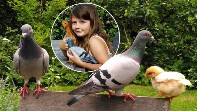 Kip Mosterd is uitgebroed door postduif-paar (en heeft nu Fien als moeder): kan het nóg gekker?