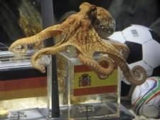 Octopus Paul kiest voor Spanje