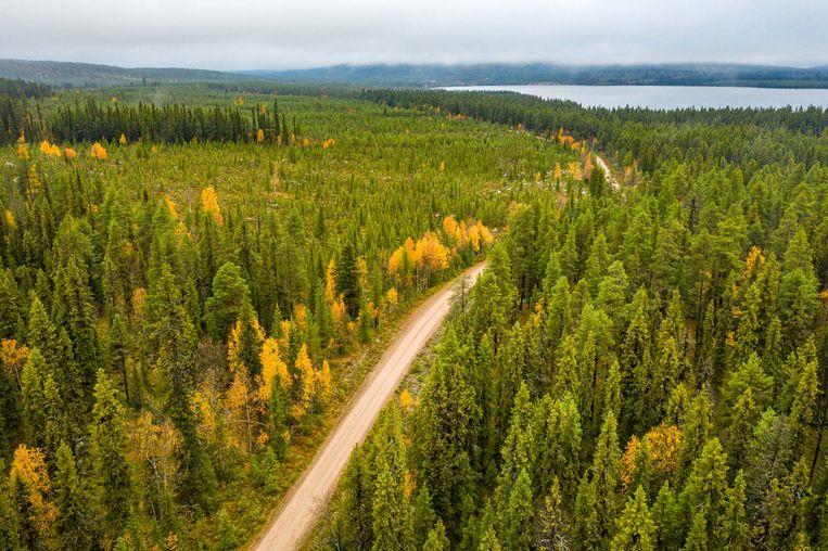 De Zweedse houtsector wil de komende tien jaar 20 procent meer bos kappen en aanplanten.  Beeld Marcus Westberg