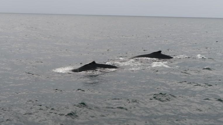 Arne is walvissen gaan spotten en kon meteen een optreden scoren op de boot.