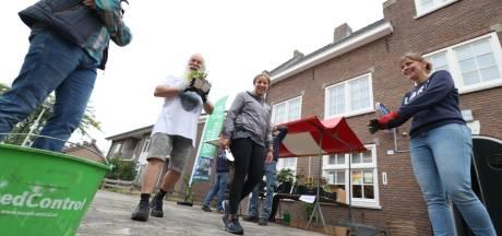 Steenbreek in Helmond: Stenen eruit, plantjes erin