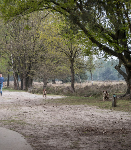 Stichting Promotie Eersel teleurgesteld over schrappen manager en uitkijktoren Cartierheide