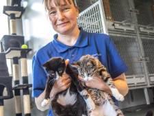 De ene kitten na de ander: topdrukte in Dierenasiel Zwolle