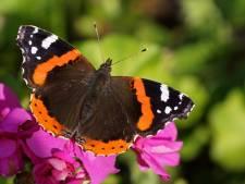 Voor een vlinderexplosie hoef je niet weg te duiken