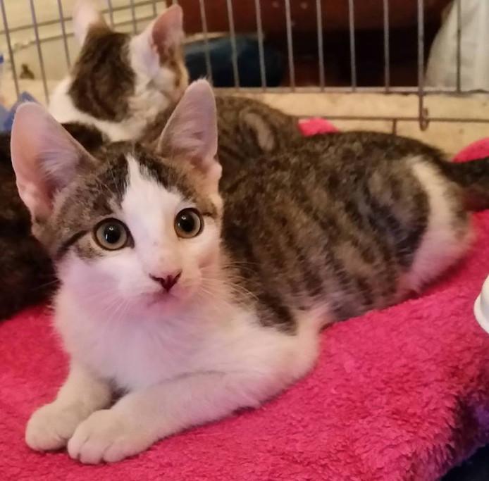 Ivar is een gecastreerd katertje dat van spelen en knuffelen houdt. Een binnenkat, volgens de Stichting Straatkat.