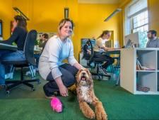 Vandaag mag je hond mee naar het werk (en daar profiteert iedereen van)