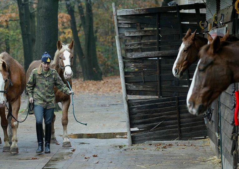 Paarden in de manege. (ANP) Beeld null