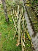 De afgekraakte boompjes werden door de politie teruggevonden in de tuin van het verblijf van de Nederlandse jongeren.