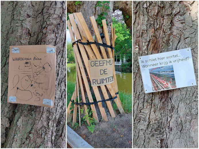 Kastanjebomen op het Exercitieveld in Woerden