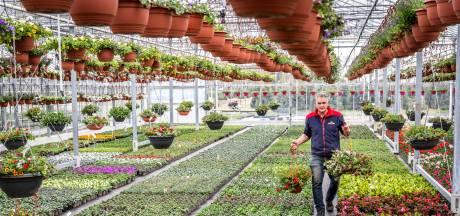 Bloemenkas van Marc en Jolanda uit Liessel wordt platgelopen, met dank aan corona