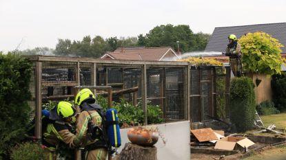 Zeldzame bosuil overleeft brand in volière niet