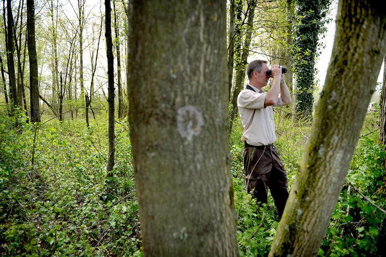 Een boswachter op controle in een bos. De natuurinspectie moet het met minder personeel doen, en dat heeft gevolgen. Beeld ID / CARLO COPPPEJANS