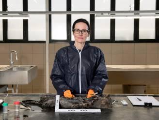 """Dierenarts Leen Van Brantegem onderzoekt misdrijven op dieren: """"De bijsluiter van rattenvergif in de maag van een hondje ... Dat zegt genoeg, hé"""""""