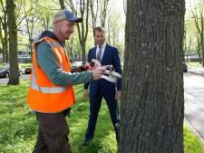 Den Haag begint met vaccineren duizenden bomen
