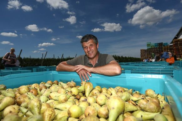Karel Paesmans gaf de voorbije zomer zelfs 50.000 kilo peren weg.