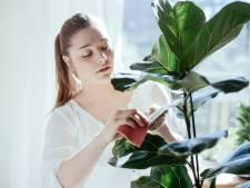 Huit plantes d'intérieur faciles à entretenir pour ceux qui n'ont pas la main verte