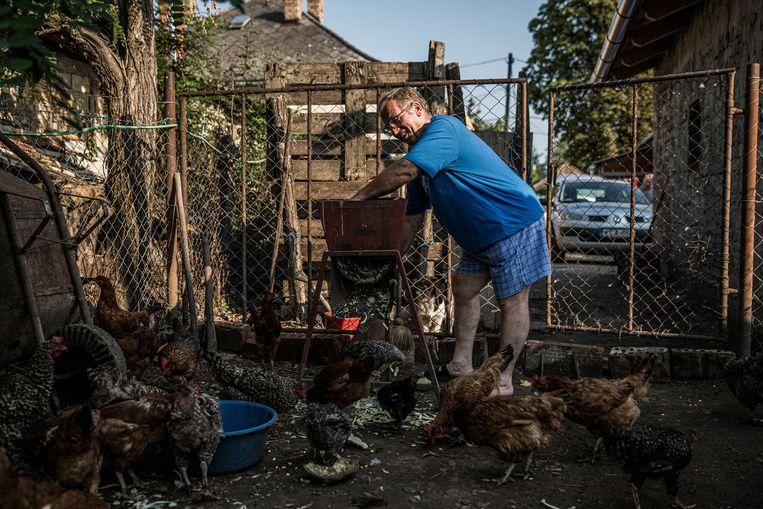 Istvan Teichel runt een klein landbouwbedrijf in het comitaat Fejér: 'Wat kan ik doen? Ik doe er niet toe.' Beeld NYT