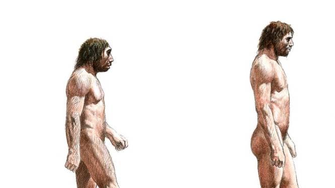 Creativiteitsgenen gaven homo sapiens voordeel op neanderthaler