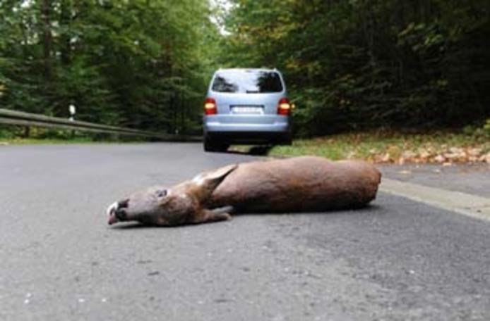 Ree dood op de weg
