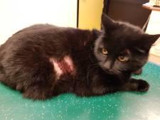 Weerloze kat Luna verminkt door vuurwerk, radeloze eigenaar looft beloning uit