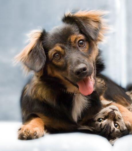 Je meubilair beschermen tegen je hond of kat: met deze tips blijft de schade beperkt