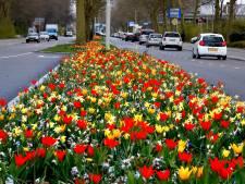 Fleurige bloemetjes luiden de lente in aan de Gorcumse Banneweg