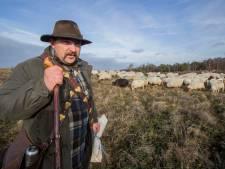 Ezel moet schaapskudde op de Sallandse Heuvelrug beschermen tegen aanvallen van wolven: 'Maar hij moet eerst nog wel flink groeien'