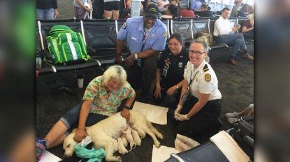 Golden Retriever bevalt van acht gezonde puppy's in luchthaven van Florida