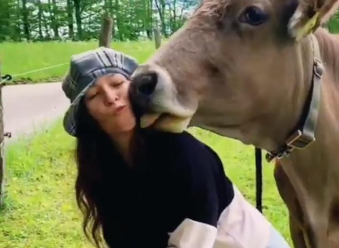 Le #KuhKussChallenge invite à embrasser des vaches pour récolter des fonds à des fins humanitaires.