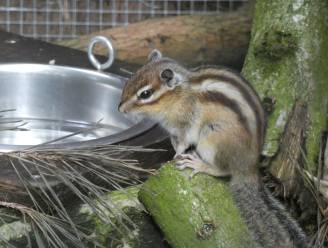 Suikereekhoorns en witwangdwergooruil opgevangen in De Zonnegloed: nu meer dan 400 dieren in dierenopvangcentrum