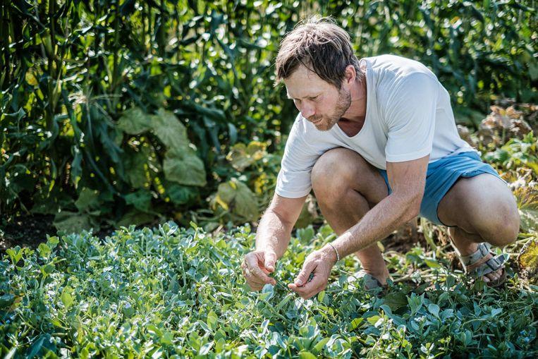 Rasmus Kofoed op de boerderij: 'Ik ben opgegroeid met het idee dat je niet enkel neemt van de grond,  maar ook iets teruggeeft.'  Beeld Bob Van Mol