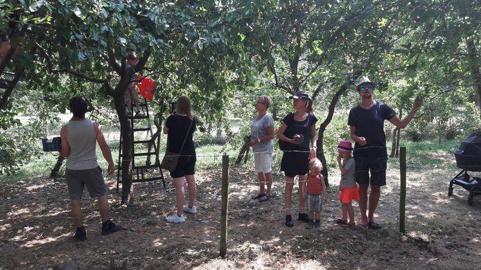 Plukken in de krozenboomgaard.