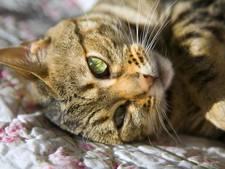 Kattenmoordenaar krijgt 16 jaar celstraf
