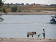 'Meer ruimte voor dieren op Waalstrand Nijmegen, minder voor mensen'