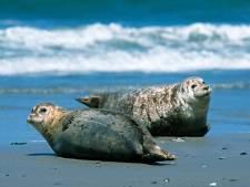 Milieuorganisaties gaan 800.000 kilo afval uit Waddenzee halen